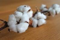 Cotten is a natural fiber. | MakersValley Blog