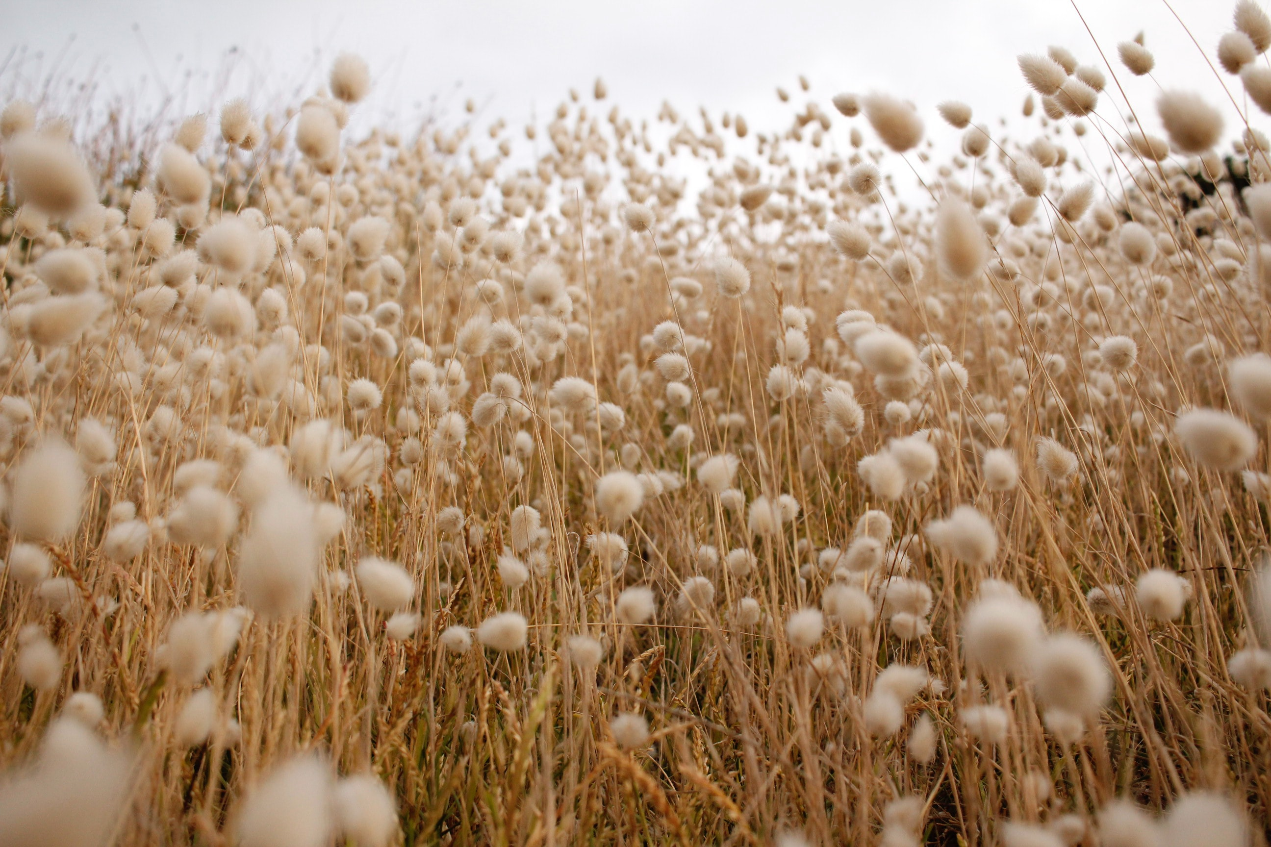 MakersValley Blog | harmful impacts of cotton on environment