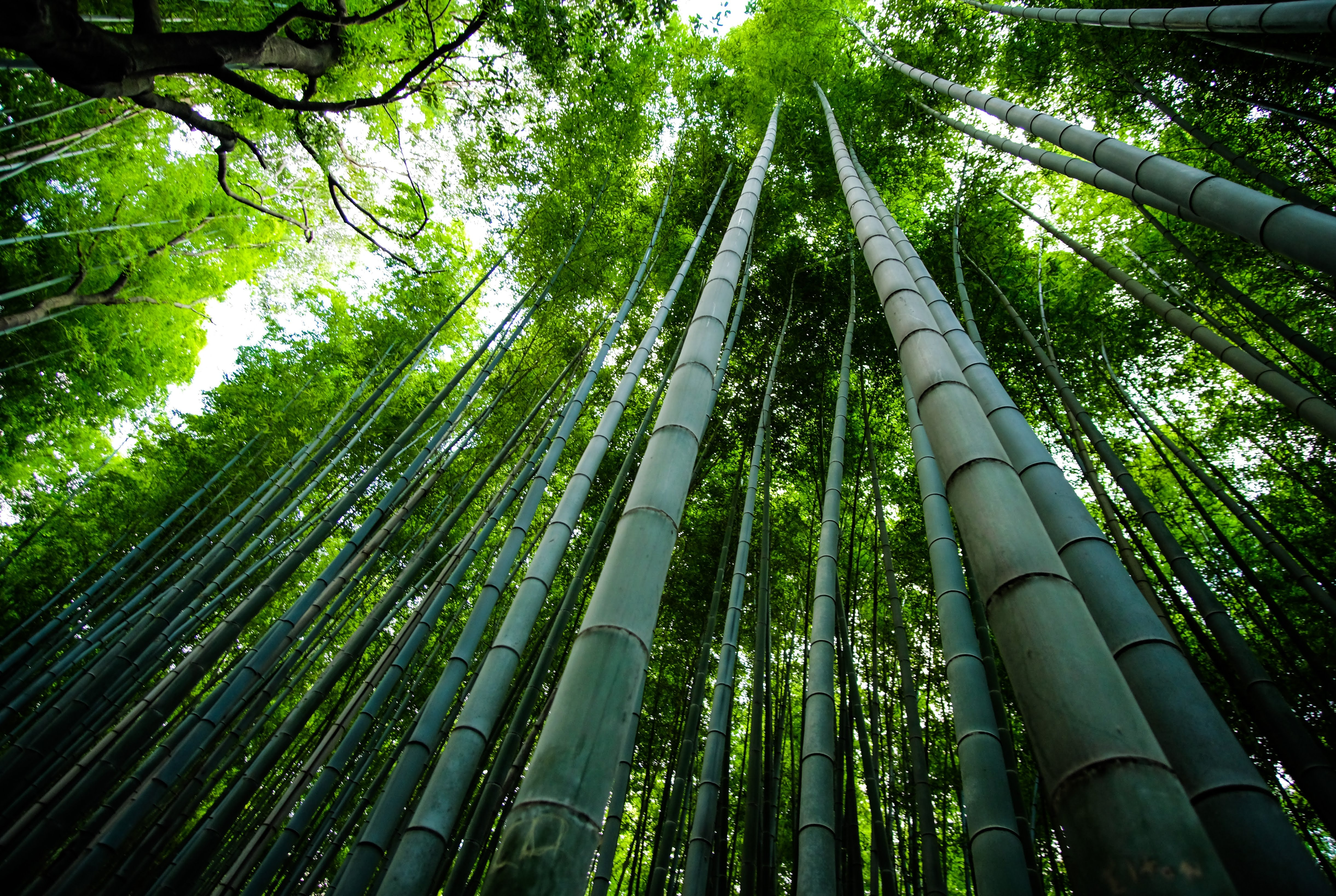 MakersValley Blog | alternatives to cotton | bamboo